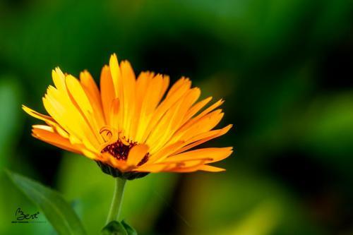 Een late bloem in mijn tuin