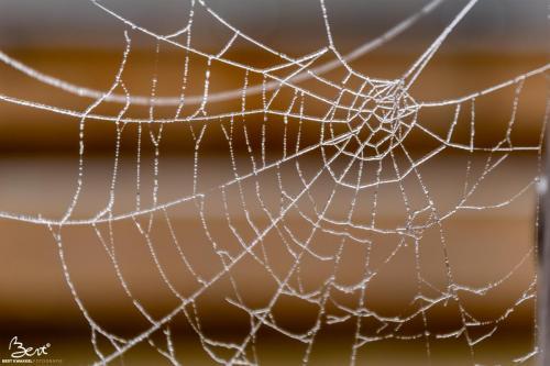 Web met dauw
